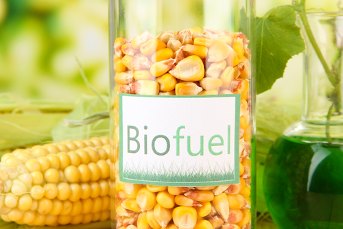 Corn kernels in a container labeled, Biofuel
